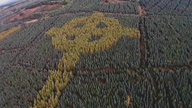 В ирландском лесу обнаружили гигантский кельтский крест