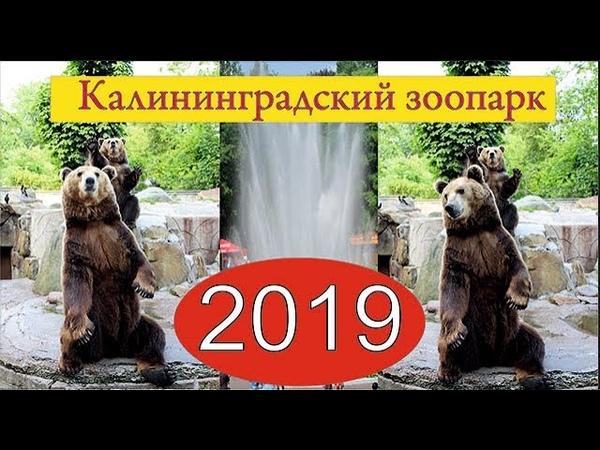 Калининградский зоопарк 2019.Экскурсии по Калининградской области. Kaliningrad Zoo