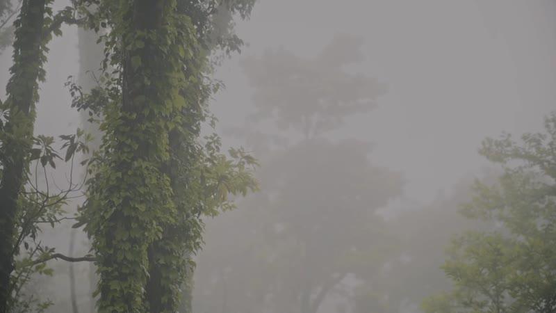 온스테이지 곽푸른하늘 - 곰팡이