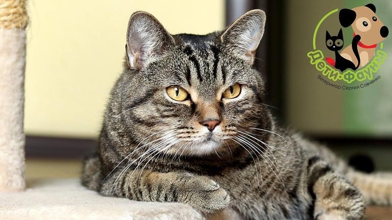 Как узнать что кошка беременна Основные признаки беременности