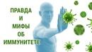 Правда и мифы об иммунитете О самом главном