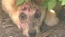 ★ Этот искалеченный щенок изменил мир Закон Гуччи
