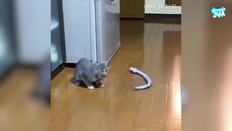 Самые забавные и смешные коты