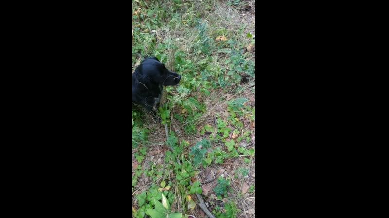 Сосновый бор, Феликса учат собирать грибы,а кто? Серёга и Чарли....