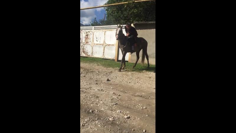 Лошадка турбо