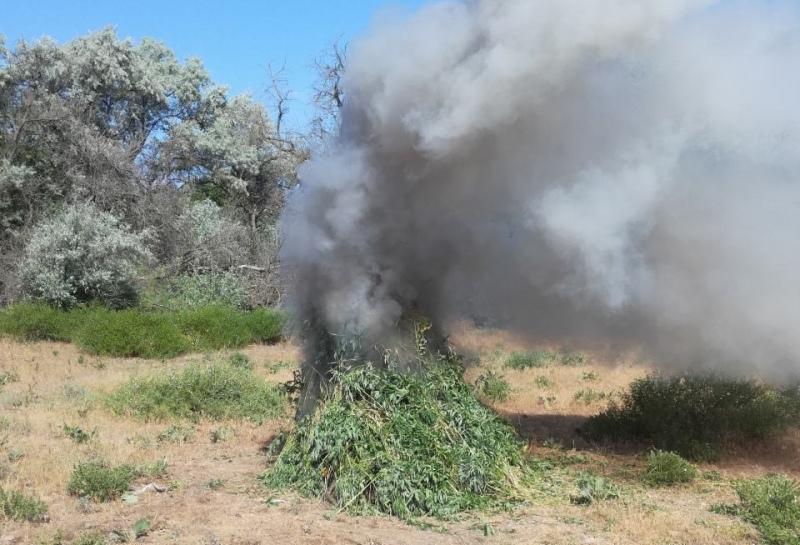 Крупный очаг дикорастущей конопли уничтожен в Лаганском районе