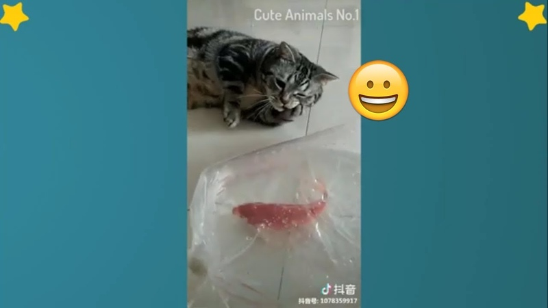 Funny Pets Animals Of The Week - Funny Pet Videos Compilation 1