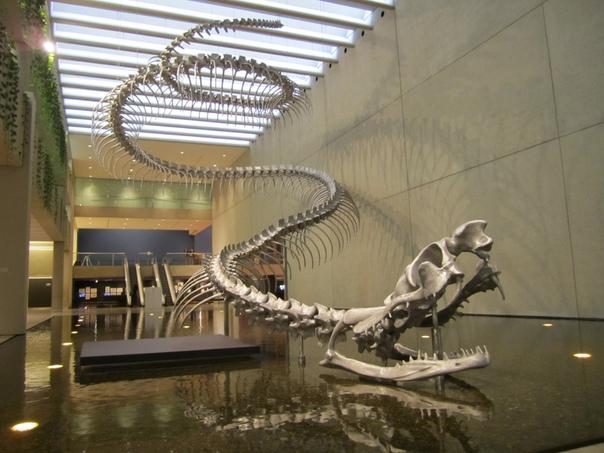 Самая большая змея в истории Земли