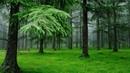 Дождь лес пение птиц Поющие птицы в дождливый день Лес наполненный звуками природы