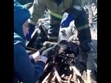 Иркутские пожарные спасли новорожденных лисят