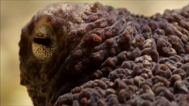 Что делает осьминог когда находит для себя жилище What does an octopus do when it finds a home
