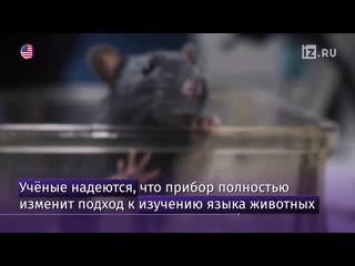 Переводчик с крысиного