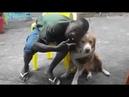 Parece que esse cachorro não gostou muito de ser mil grau!