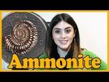 Аммонит 1 кг серебро - Монголия - 2018