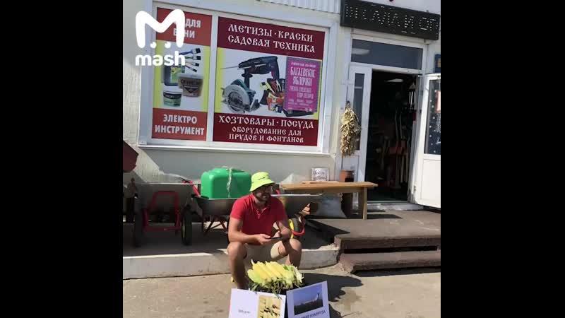 Саратовец продаёт 'ту самую кукурузу' с подмосковного поля mp4