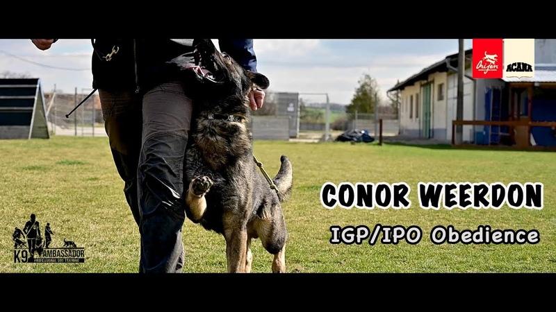 Conor (Mc) Weerdon - IGP(IPO) Obedience - March 2019 / 4K UltraHD
