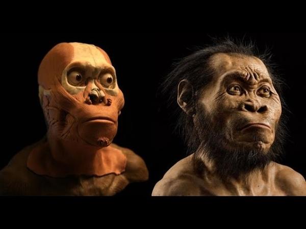 A aparência do mais novo ancestral do homem revelada