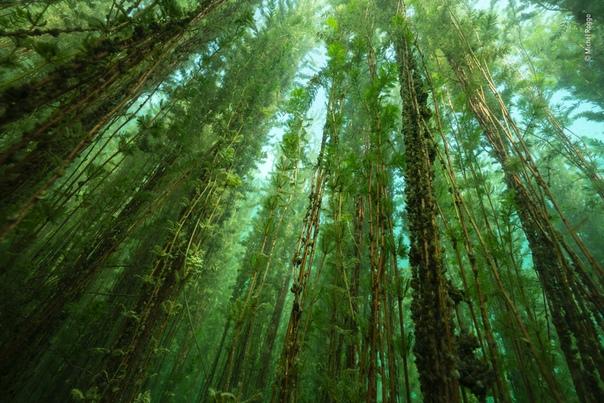 «Пресноводный болотный лес»
