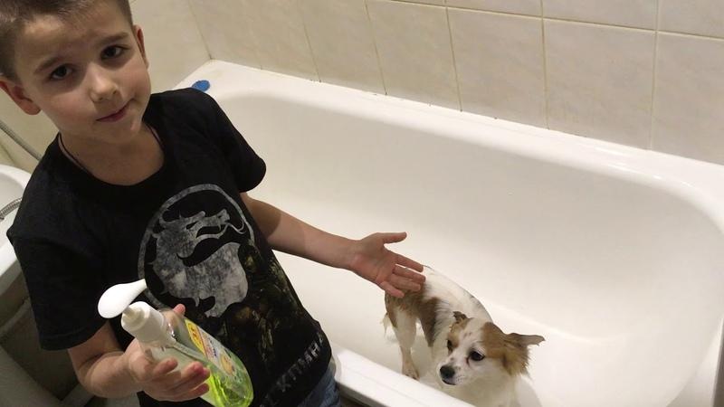 Как правильно купать собаку!