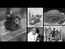 Самые страшные тайные опыты и эксперименты ЦРУ над людьми Документальный фильм