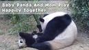 Baby Panda And Mom Play Happily Together iPanda