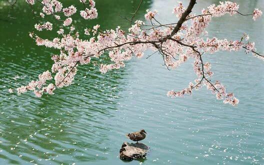 Добрый весенний день Галина Лифанова 2Весна теплом стучится в окна,резвится добрый светлый день,деревьев хрупкие волокналаскает облачная тень.Заснули тучи в дальней глади,не шлет поток холодный