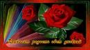Красивое пожелание . Все розы для тебя цветут.