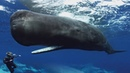 Sperm Whales Clicking You Inside Out — James Nestor at The Interval