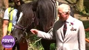 Prince Charles oversees horse logging in Wales
