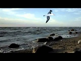 L'albatros - Joe Dassin