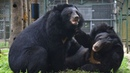 Rescued bears enjoy their happy ever after moment