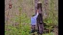 Коп по войне Блиндаж оборотень Dugout werewolf Searching with Metal Detector