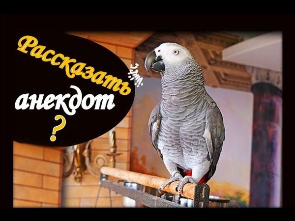 ПОПУГАЙ изображает ОБЕЗЬЯНУ и ДЯТЛА🙀РЕАКЦИЯ попугая на анекдот РАССМЕШИЛА ДО СЛЕЗ🤣
