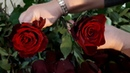 Сравнение сортов роз от Эквадорских плантаций Эксплорер Топ Эксплорер и Борн Фри