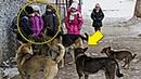 Мы кричали, но люди разбегались, как тараканы На помощь детям пришли бродячие собаки