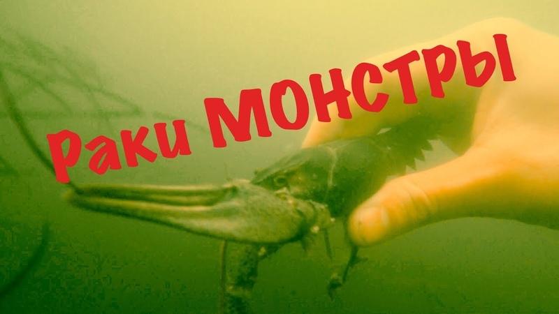 Подводная охота на раков Рак откусил сосок