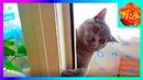 Как кот Шерлок учится разговаривать Смешные животные 🐱🐈