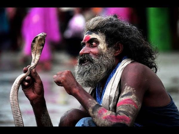 В Индии обезьяна украла кобру из рук заклинателя змей