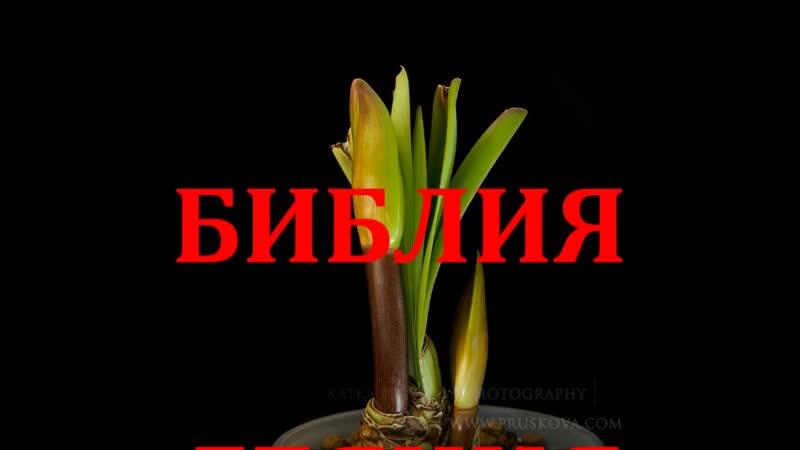 ДЕЯНИЯ АПОСТОЛОВ ГЛАВА 10