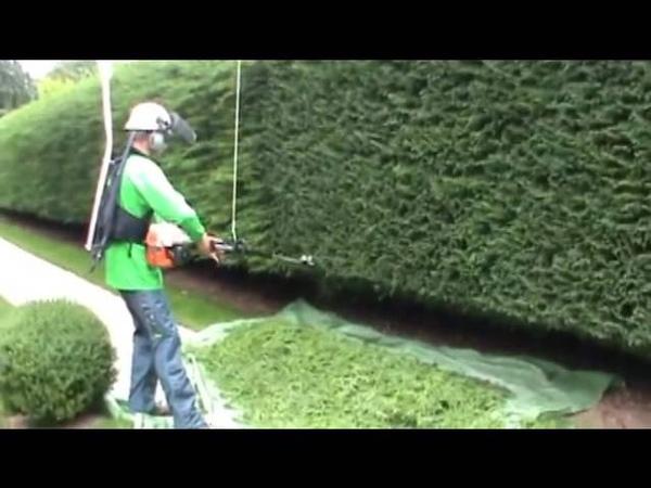 Hedge trimming an 80 yard