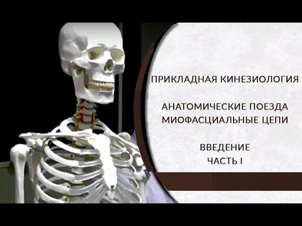 Прикладная кинезиология. Анатомические поезда. Миофасциальные цепи. Циванюк А. В. Часть I
