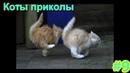 Коты Приколы 9, Смешная подборка роликов про кошек, Funny cats 2019