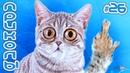 СМЕШНЫЕ КОТЫ И КОШКИ 2019 ПРИКОЛЫ С КОТАМИ ДО СЛЁЗ Забавные и смешные животные