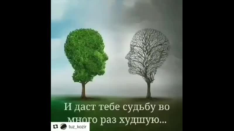 Dr.Səadət Fərzəliyeva on Instagram_ _Her günümüzə_.mp4
