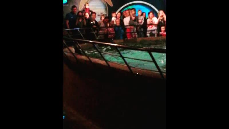 Кормление скатов в Питерском океанариуме