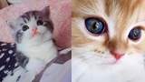 Cute Baby Kittens Will Warm Your Heart
