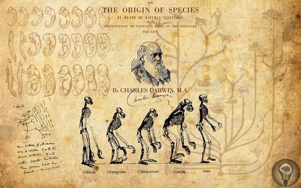 7 мифов о Дарвине, его теории и вере