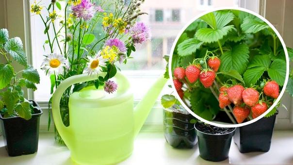 Порадуйте себя и близких, приобретайте набор для собственноручного выращивания клубники в домашних условиях. Вырастить клубнику можно за 3 простых шага:Приобретите набор у нас