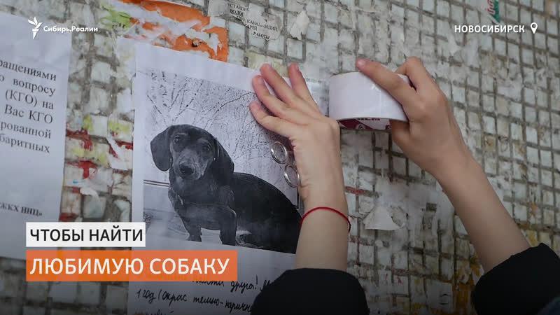 Сотни неравнодушных людей поддержали девочку у которой украли собаку   Сибирь.Реалии