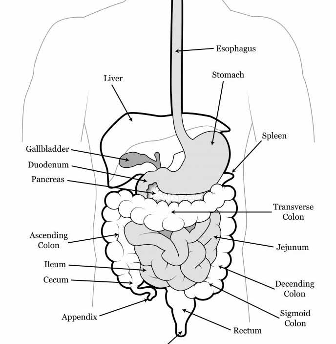 Постоянные запоры могут привести к закупорке желудочно-кишечного тракта.